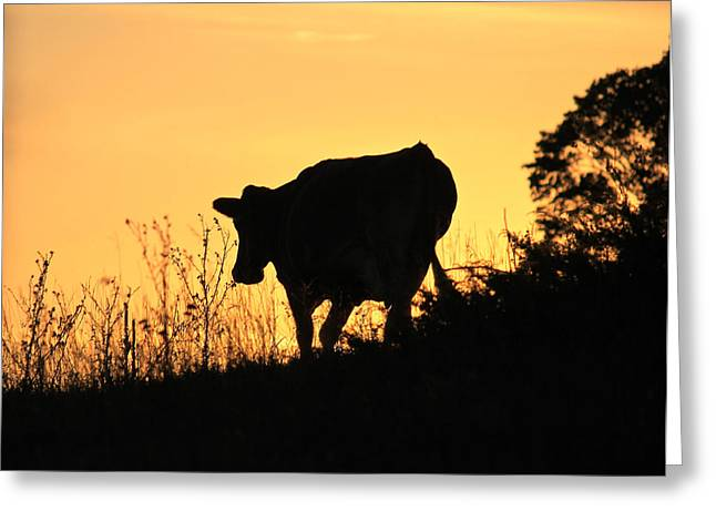 Greeting Card featuring the photograph Strolling Into The Sunset by Penny Meyers