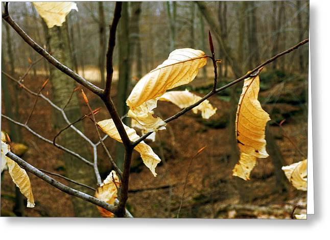 Stubborn Leaves Greeting Card by Jackie Carpenter