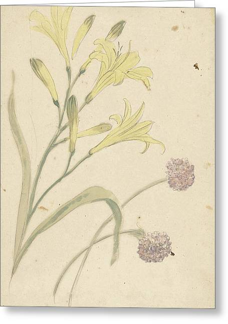 Studies Flower Of A Yellow Lily And A Blooming Onion Greeting Card by Quint Lox