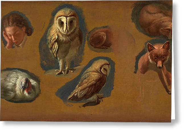 Studies Of A Fox, A Barn Owl, A Peahen, And The Head Greeting Card