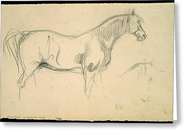 Studies Of A Horse In Profile Greeting Card