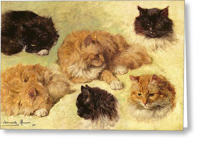 Studies Of Cats, 1895 Greeting Card