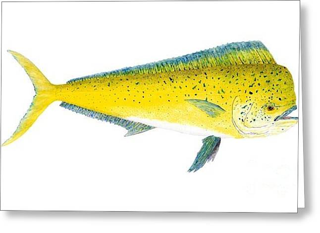 Greeting Card featuring the painting Study Of A Mahi Mahi by Thom Glace