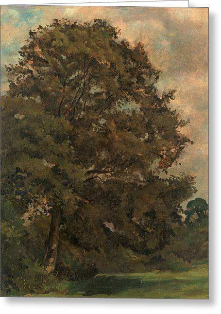 Study Of An Ash Tree, Lionel Constable, 1828-1887 Greeting Card by Litz Collection