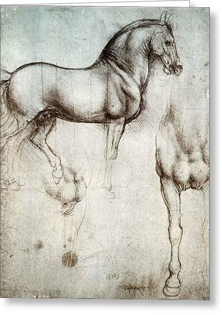 Study Of Horses Greeting Card by Leonardo da Vinci