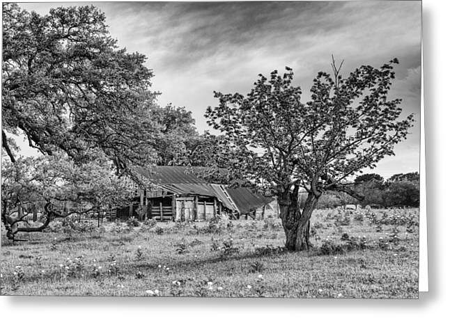 Study Of Rural Life In Smithville Texas Greeting Card