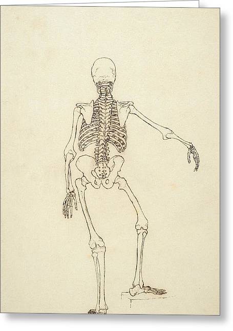 Study Of The Human Figure, Posterior View, From A Comparative Anatomical Exposition Greeting Card by George Stubbs