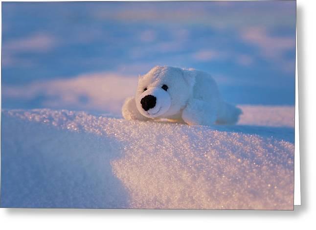 Stuffed Toy Of Polar Bear On Snow Greeting Card