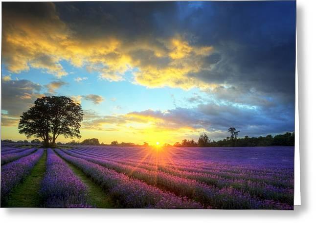 Stunning Atmospheric Sunset Over Vibrant Lavender Fields Greeting Card