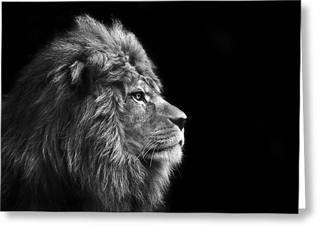 Stunning Facial Portrait Of Male Lion On Black Background In Bla Greeting Card by Matthew Gibson
