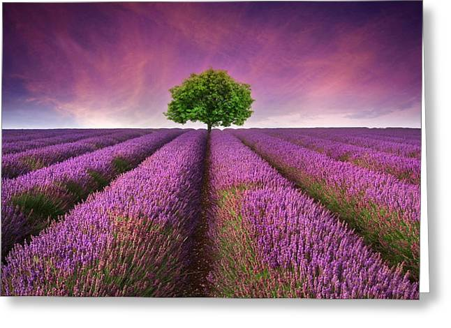 Stunning Lavender Field Landscape Summer Sunset With Single Tree Greeting Card by Matthew Gibson