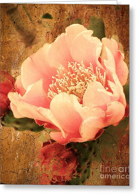 Stunning Pink Prickly Pear Greeting Card by Beverly Guilliams