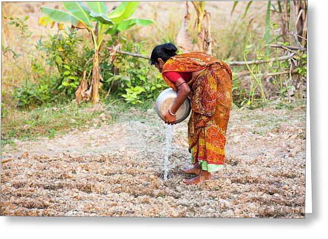 Subsistence Farmer Watering Vegetables Greeting Card by Ashley Cooper