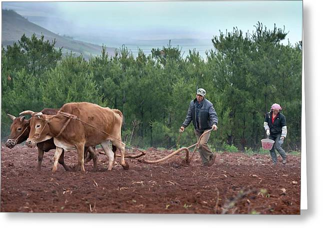 Subsistence Farmers Ploughing A Field Greeting Card by Tony Camacho