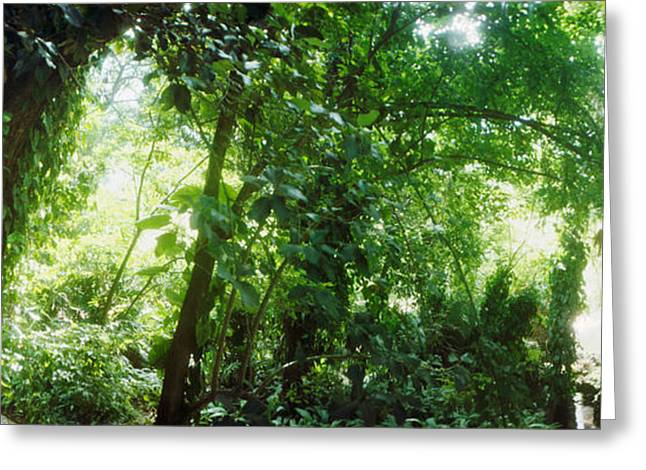Subtropical Forest Of Parque Lage Greeting Card
