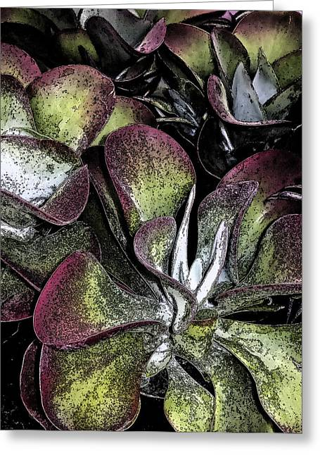 Succulent At Backbone Valley Nursery Greeting Card by Greg Reed