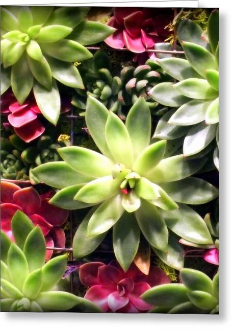 Succulent Beauties Greeting Card by Karen Wiles