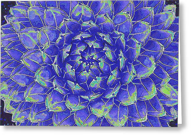 Succulent - Blue Greeting Card by Jane Schnetlage
