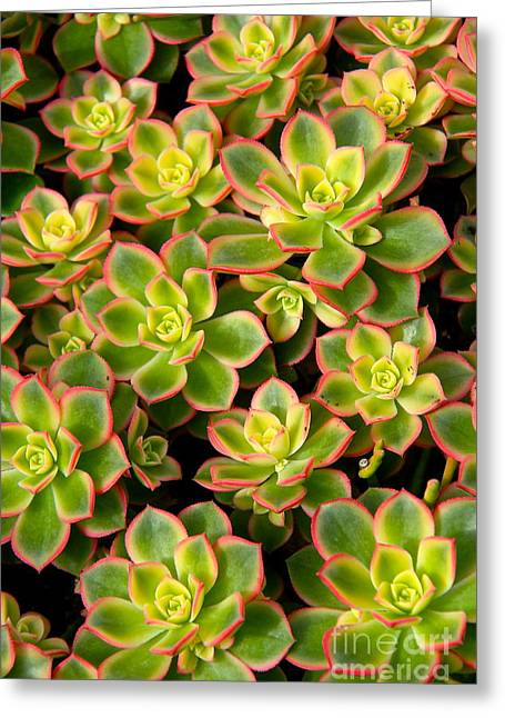 Succulent Glow Greeting Card