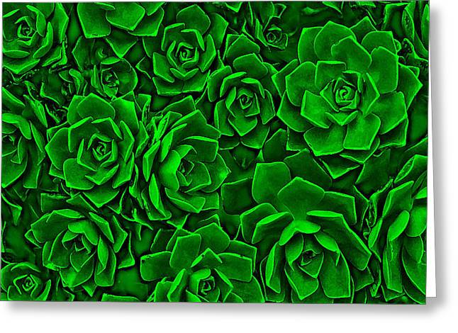 Succulent Green Greeting Card