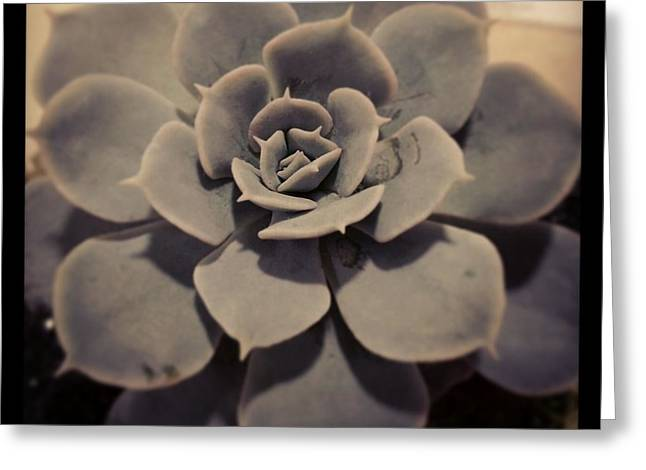Succulent Greeting Card by Heather L Wright
