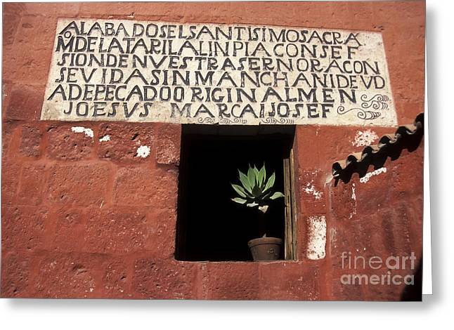 Succulent In Window Greeting Card by James Brunker