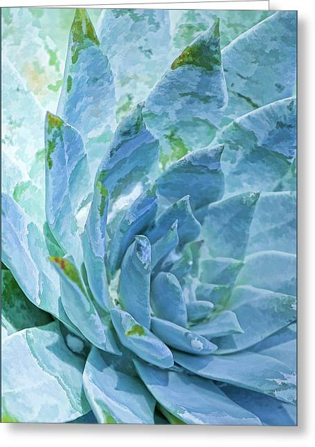 Succulent Swirl Greeting Card