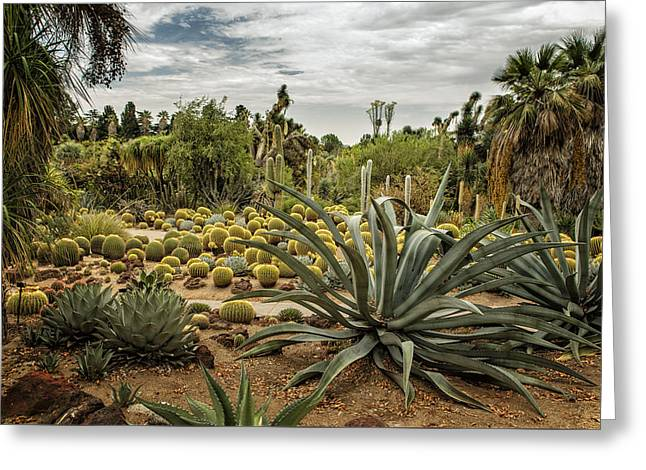 Succulents At Huntington Desert Garden No. 3 Greeting Card by Belinda Greb