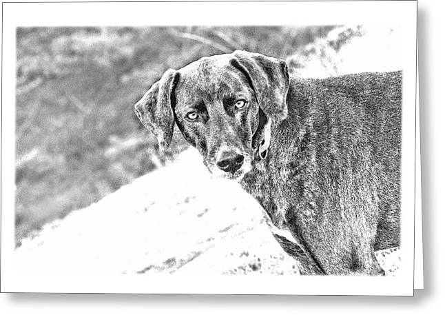 Such A Pretty Girl Greeting Card by Peggy Collins