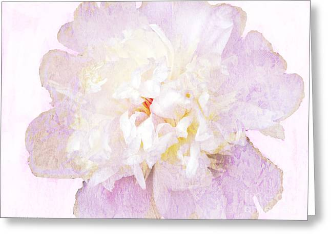 Such A Pretty Peony Greeting Card