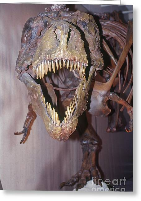 Sue The Tyrannosaurus Rex Greeting Card