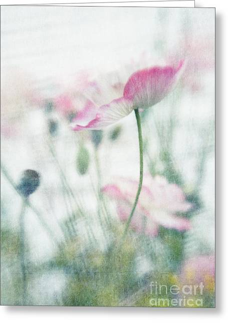 suffused with light III Greeting Card