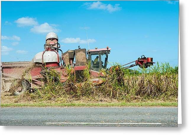 Sugar Cane Being Harvested, Lower Greeting Card by Panoramic Images