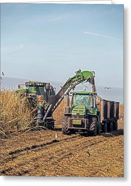 Sugar Cane Harvest Greeting Card by Jim West