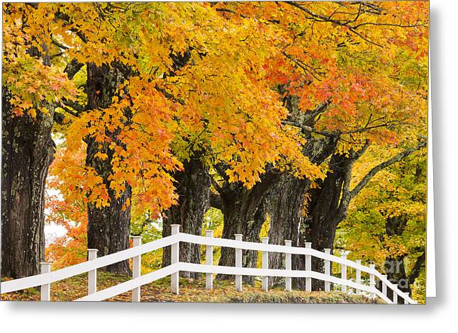 Sugar Maple Color Greeting Card
