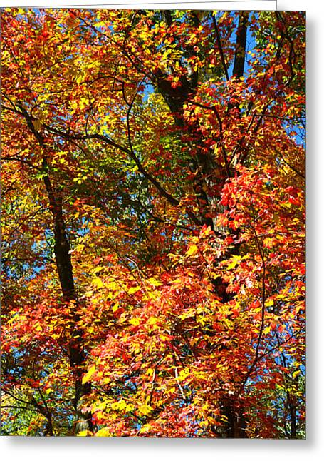 Sugar Maple Sky Greeting Card