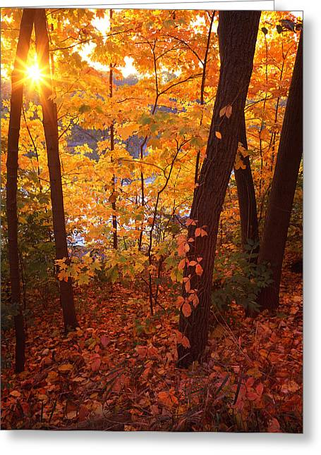 Sugar Maple Sunrise Greeting Card by Ray Mathis