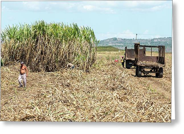 Sugar Plantation Workers Greeting Card by Peter J. Raymond