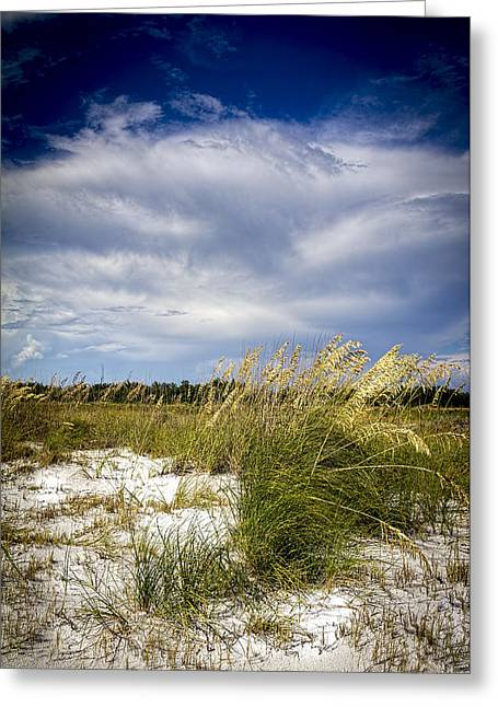 Sugar Sand And Sea Oats Bw Greeting Card
