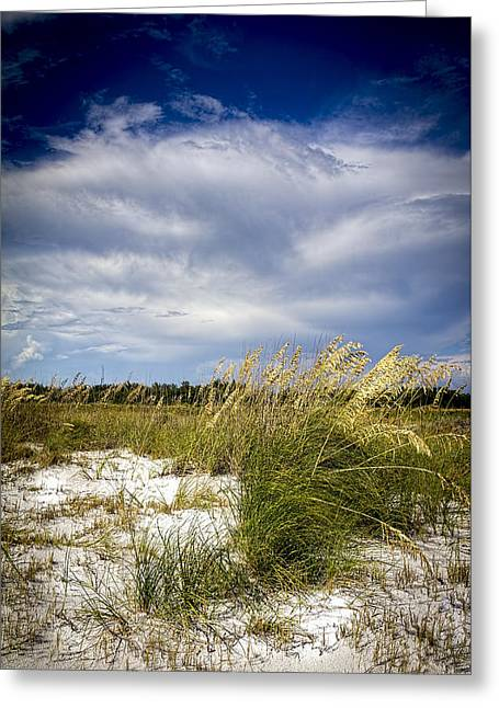 Sugar Sand And Sea Oats Greeting Card by Marvin Spates