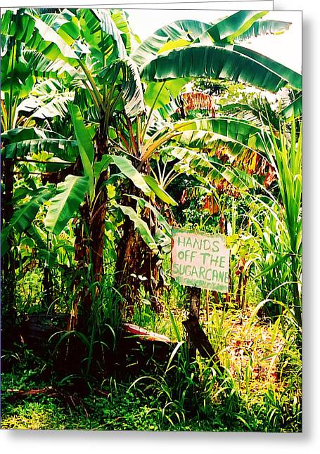 Sugarcane Greeting Card