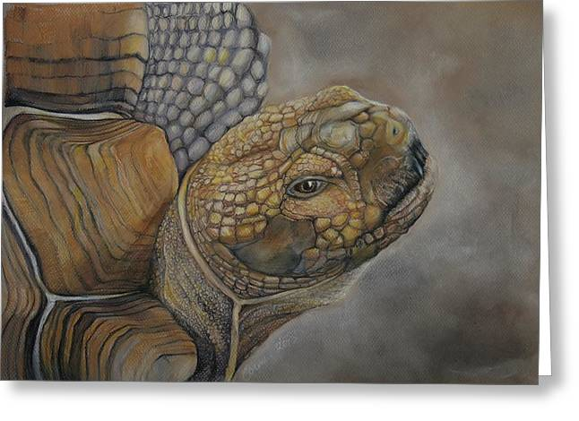 Sulcata Greeting Card by Jean Cormier
