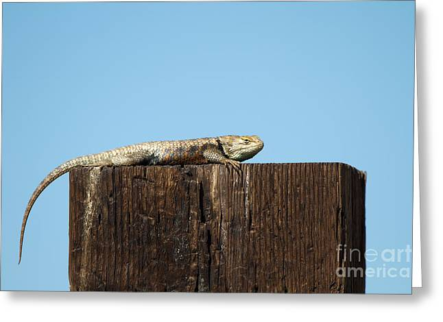 Sulky Lizard Greeting Card