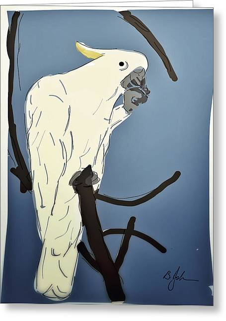 Sulphur Crested Cockatoo Greeting Card by Barry Johansen