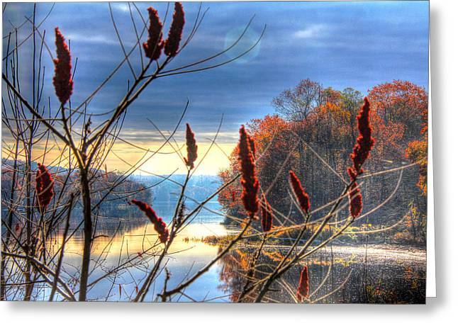 Sumacs Along The Kennebec Greeting Card