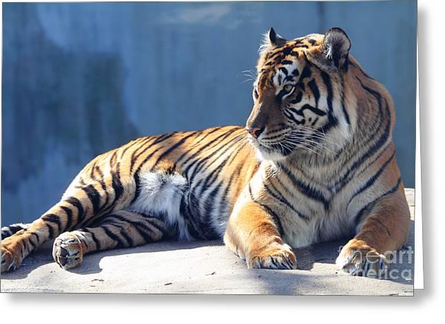 Sumatran Tiger 7d27276 Greeting Card