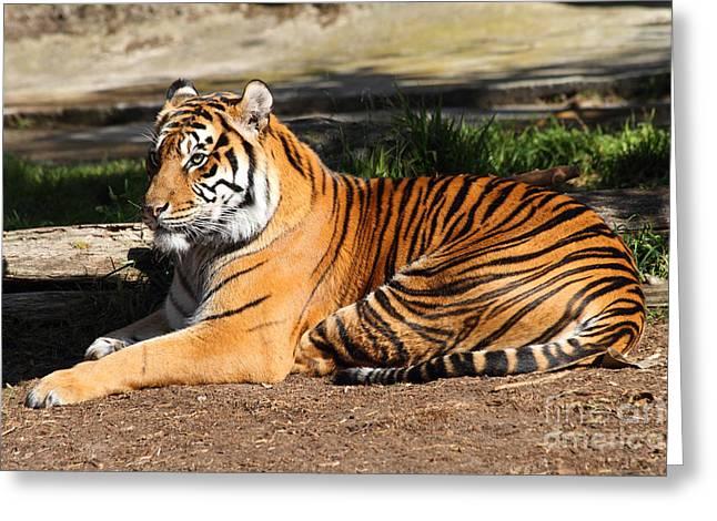 Sumatran Tiger 7d27310 Greeting Card