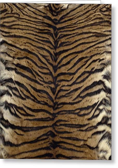 Sumatran Tiger Skin Greeting Card
