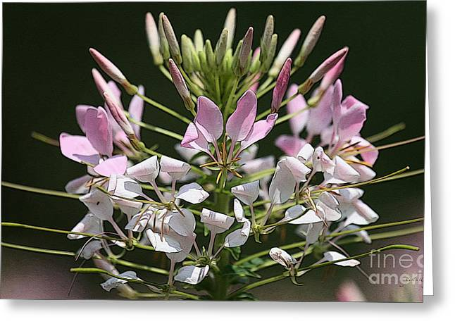 Summer Blossom Greeting Card by Yvonne Wright
