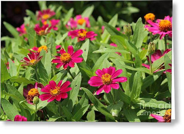 Summer Blossoms Greeting Card